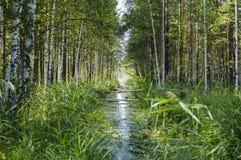 Cala en el bosque Foto de archivo libre de regalías