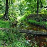 Cala en el bosque con el puente caido del árbol Imagen de archivo libre de regalías