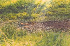 Cala en el bosque con sol Fotos de archivo libres de regalías