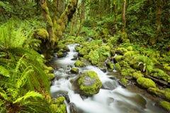 Cala en la selva tropical enorme, garganta del río Columbia, los E.E.U.U. Fotografía de archivo