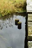 Cala en las maderas Foto de archivo libre de regalías