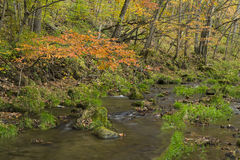 Cala en otoño Foto de archivo libre de regalías