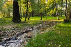 Cala en parque del otoño Foto de archivo libre de regalías