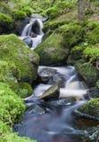 Cala hermosa del bosque Imagenes de archivo