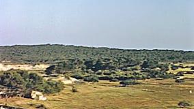 Cala Millor Playa stock footage