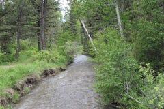 Cala Montana de la primavera Imagenes de archivo