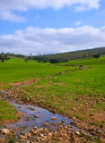Cala que va abajo de la montaña para el pasto de robles Imagen de archivo
