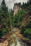 Cala/río de la montaña que fluye entre el bosque fotos de archivo libres de regalías
