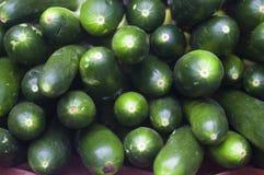 Calabacín Foto de archivo libre de regalías
