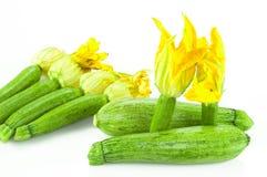 Calabacín con la flor Fotografía de archivo libre de regalías
