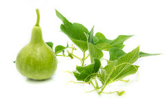 Calabash, Bottle Gourd Stock Photos