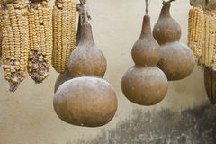 Calabash drying Stock Photos