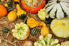 Calabashes on marked stand. Fresh stained calabashes on marked stand Royalty Free Stock Photo