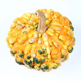 Calabaza amarilla Imagen de archivo libre de regalías