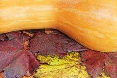 Calabaza amarilla en follaje colorido del otoño como fondo de la naturaleza Foto de archivo