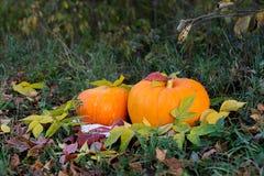 Calabaza amarilla para el día de fiesta Halloween al aire libre Foto de archivo