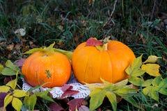 Calabaza amarilla para el día de fiesta Halloween al aire libre Imágenes de archivo libres de regalías