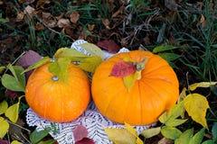 Calabaza amarilla para el día de fiesta Halloween al aire libre Fotografía de archivo libre de regalías