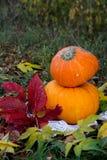 Calabaza amarilla para el día de fiesta Halloween al aire libre Imagen de archivo