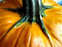 Calabaza anaranjada Fotos de archivo libres de regalías