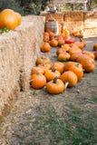 Calabaza anaranjada Imagen de archivo libre de regalías