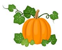 Calabaza anaranjada con las hojas. Ilustración del vector. ilustración del vector