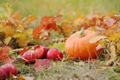 Calabaza anaranjada con las manzanas rojas en otoño Imagen de archivo libre de regalías