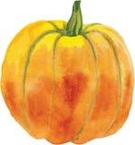 Calabaza anaranjada con una cola verde Libre Illustration