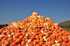 Calabaza anaranjada en un campo Foto de archivo libre de regalías