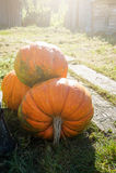 Calabaza anaranjada grande Foto de archivo