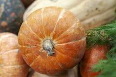 Calabaza anaranjada jugosa en montón en mercado fotos de archivo