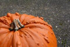 Calabaza anaranjada verrugosa, grande de la acción de gracias Fotos de archivo