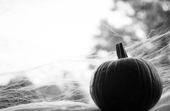Calabaza blanco y negro en ventana con los web de araña Imagenes de archivo