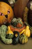 Calabaza, calabazas, y maíz de la cosecha de la caída Imagen de archivo libre de regalías