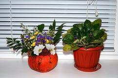 Calabaza con las flores en el alféizar en Halloween Imágenes de archivo libres de regalías