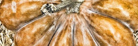 Calabaza Día de la acción de gracias Víspera de Todos los Santos Foto de archivo libre de regalías