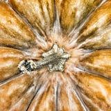 Calabaza Día de la acción de gracias Víspera de Todos los Santos Imagen de archivo libre de regalías