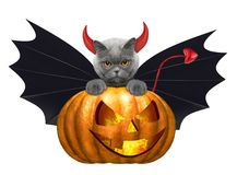 Calabaza de Halloween con el gato lindo en el traje del palo - aislado en blanco Imagenes de archivo