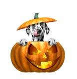 Calabaza de Halloween con el perro lindo - aislado en blanco Imágenes de archivo libres de regalías