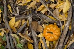 Calabaza de Halloween en un ambiente de la naturaleza de la caída Imagen de archivo