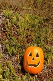 Calabaza de Halloween en una hierba Imágenes de archivo libres de regalías