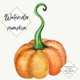 Calabaza de la acuarela del vector aislada en el fondo blanco Pintado a mano, verdura dibujada mano Halloween, acción de gracias Imagen de archivo