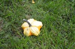 Calabaza de la caída Foto de archivo