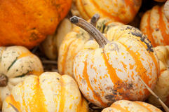 Calabaza del otoño en foco bajo. Imagenes de archivo
