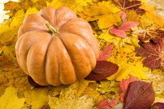 Calabaza en fondo de las hojas de otoño Imágenes de archivo libres de regalías