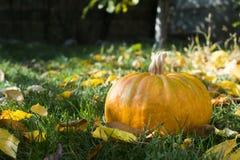 Calabaza en hierba y hojas de otoño Fotografía de archivo libre de regalías