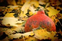 Calabaza en hojas de arce del otoño Imágenes de archivo libres de regalías