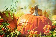 Calabaza en la hierba con la sensación del color de la vendimia Foto de archivo