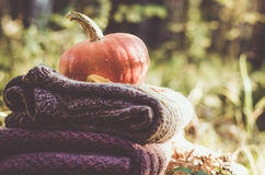 Calabaza en las chaquetas dobladas de las lanas Fotografía de archivo