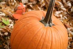 Calabaza en otoño Fotografía de archivo libre de regalías